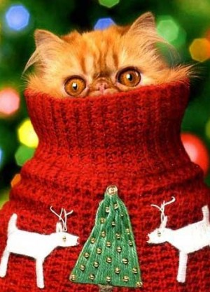 cute-christmas-cat-image-2